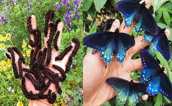 پرورش پروانه در خانه (1)