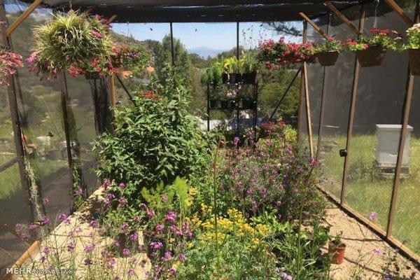 پرورش پروانه در خانه (4)