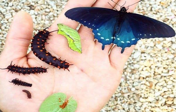 پرورش پروانه در خانه (6)