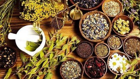 یازده گیاه دارویی که باید همیشه در خانه داشته باشید!