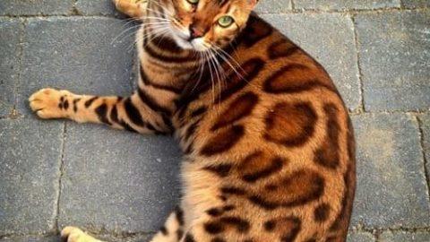 خوش عکسترین گربه دنیا!