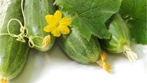مصرف خیار و میوههای با طبع سرد در فصول پاییز و زمستان ممنوع