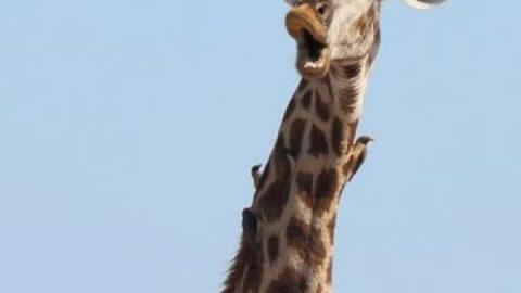 دیدنی های دنیای حیوانات