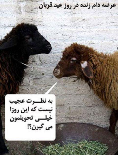 تصاویر طنز؛ عید سعید قربان