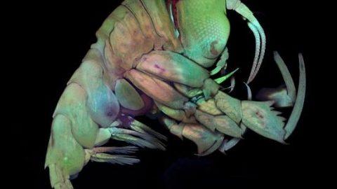 شگفت انگیزترین تصاویر میکروسکوپی سال ۲۰۱۶!