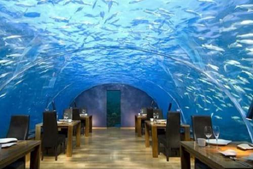 رستوران شگفت انگیز (14)