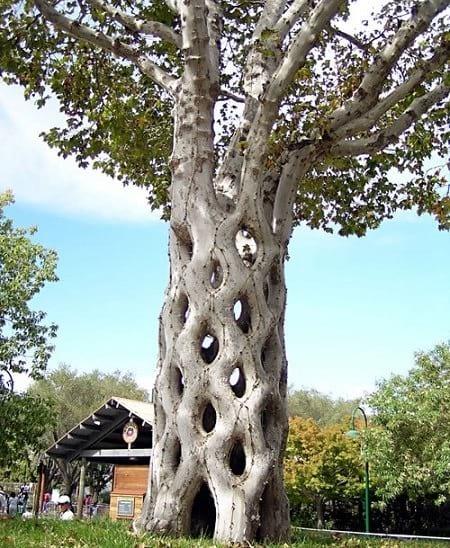 شکل دهی به درختان (2)