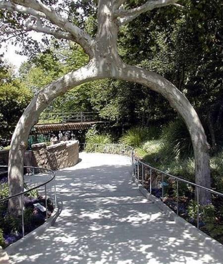 شکل دهی به درختان (3)