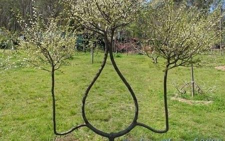 شکل دهی به درختان (5)