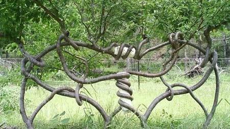 شکل دهی به درختان (6)