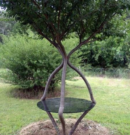 شکل دهی به درختان (7)