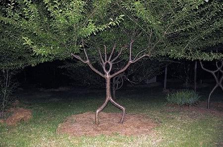 شکل دهی به درختان (8)