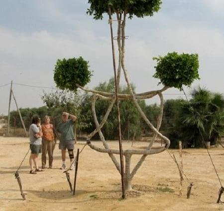 شکل دهی به درختان (9)