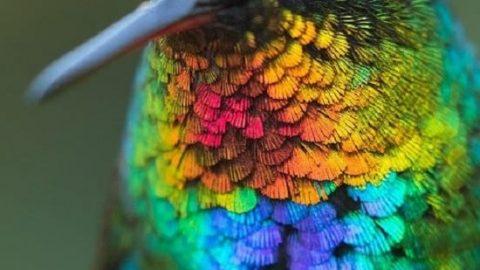 تصویر کلوزآپ تماشایی از مرغ مگس خوار!