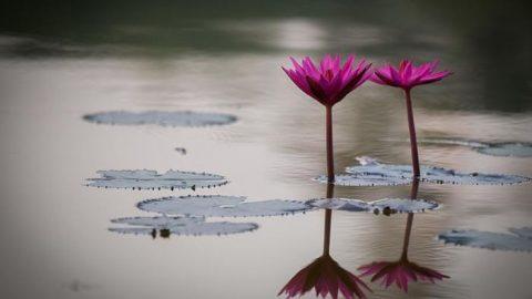 نیلوفران آبی؛ حاصل دسترنج عکاس توریست ژاپنی