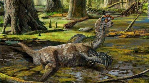 کشف اتفاقی گونه ای جدید از دایناسورهای بالدار به نام «اژدهای گلآلود»