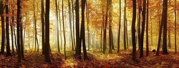 عکاسی در پاییز (2)