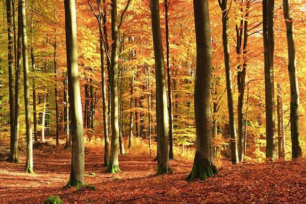 عکاسی در پاییز (7)