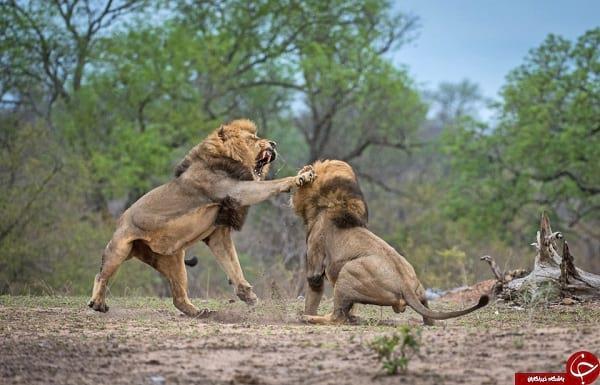 مبارزه نفس گیر (2)