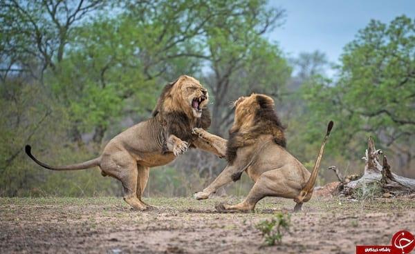 مبارزه نفس گیر (4)