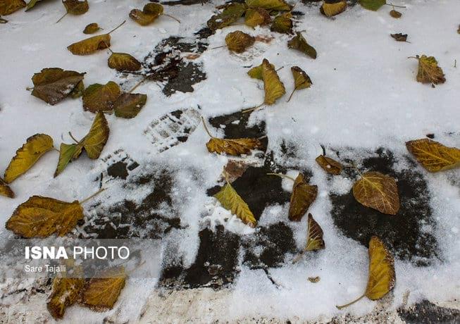 پاییز برفی (10)