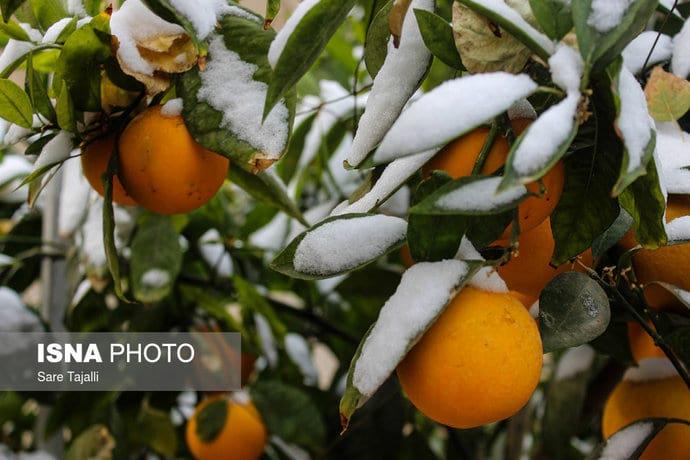 پاییز برفی (15)
