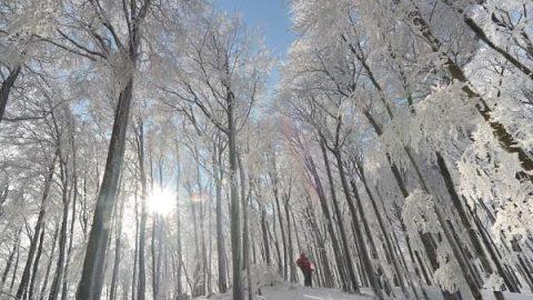 افسون زمستان و جادوی سپید آن