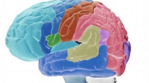 ۷ تاثیر ورزش بر فعالیتهای مغزی!