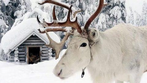 لاپلند، سحرانگیز ترین منطقه زمین در کریسمس