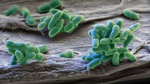 کشف مقاومترین باکتری جهان!