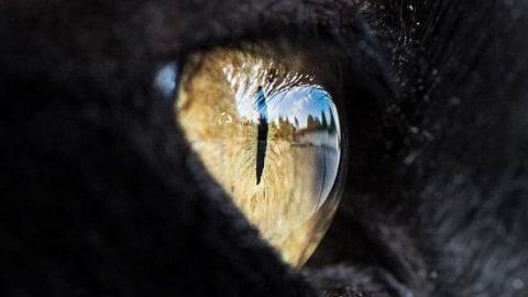 چشم گربه ای!