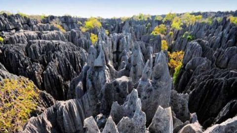 سفری هیجان انگیز به جنگل سنگی ماداگاسکار!