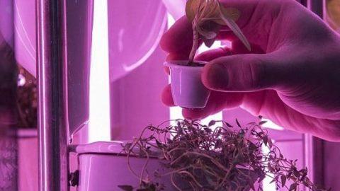 پرورش سبزیجات در آشپزخانه با یک دستگاه جدید!
