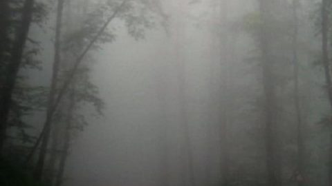 زیباترین جنگل رامسر!