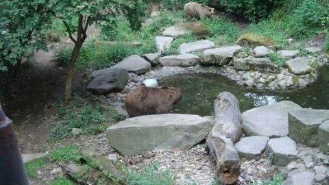 خرس های خندق قلعه کروملو!