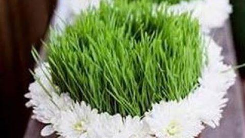 چرا قبل از نوروز سبزه سبز میکنند؟