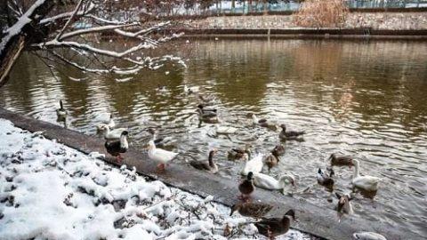 طبیعت زمستانی بینظیر نیشابور