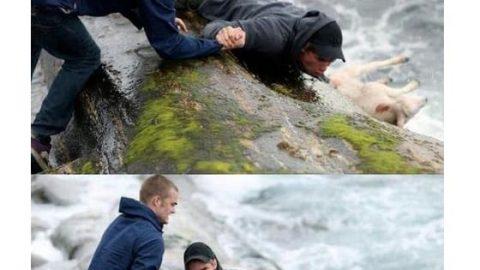 نجات جان بره کوچک از میان امواج خروشان دریا!