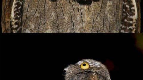 از چه چیزی ترسیده است؟!