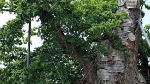 کلیسای کوچک در درخت بلوط قدیمی!