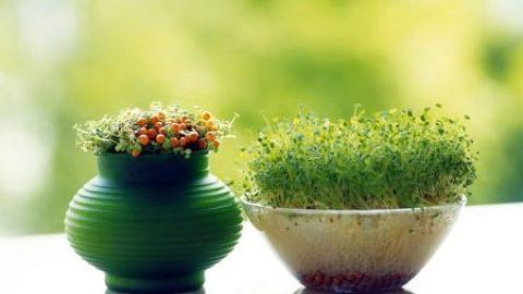 خانه تکانی و سبزه رویانیدن؛ آیین کهن نوروزی ایرانیان