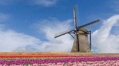 جشنواره گل های لاله در هلند