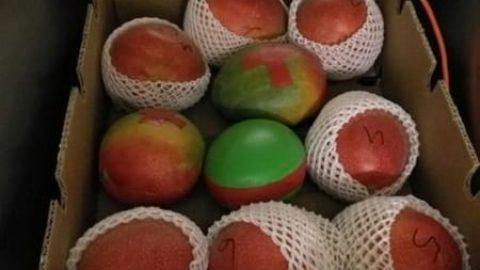 استفاده از حسگر میوهای برای اطمینان از کیفیت محصول