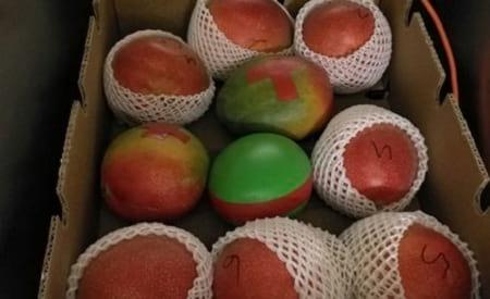 حسگر میوه ای (2)