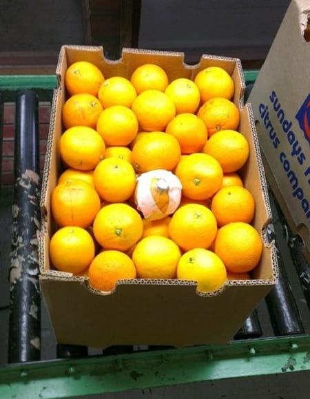 حسگر میوه ای (3)