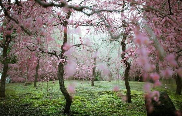 شکوفه های دیدنی (1)