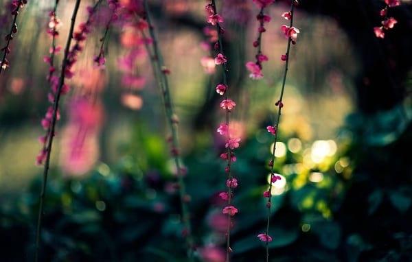 شکوفه های دیدنی (10)