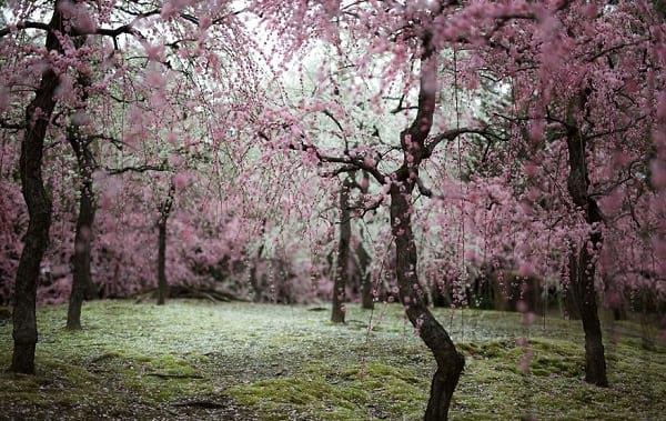 شکوفه های دیدنی (3)