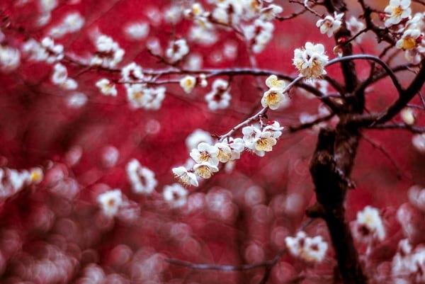 شکوفه های دیدنی (4)