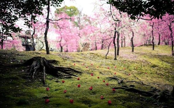 شکوفه های دیدنی (6)
